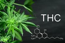 marijuana with the text 'THC'