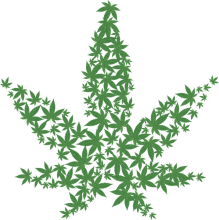 image of marijuana leaves